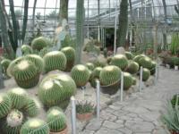 神戸・姫路サプライズプロポーズ 手柄山温室植物園
