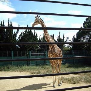 神戸・姫路サプライズプロポーズ 姫路市立動物園